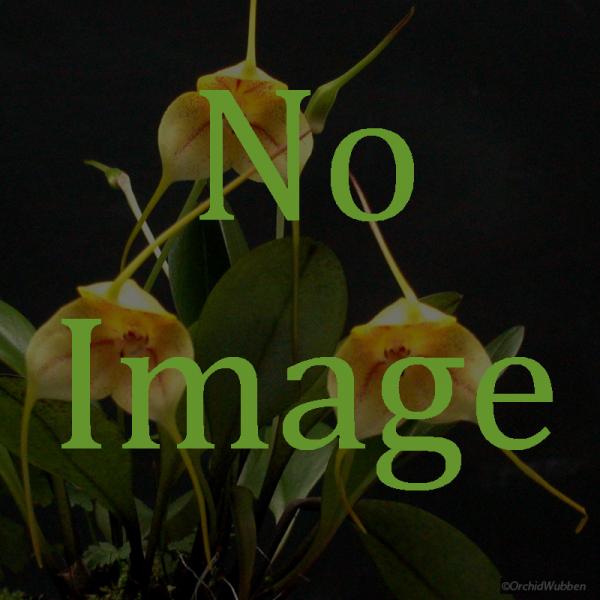 No_Image_04